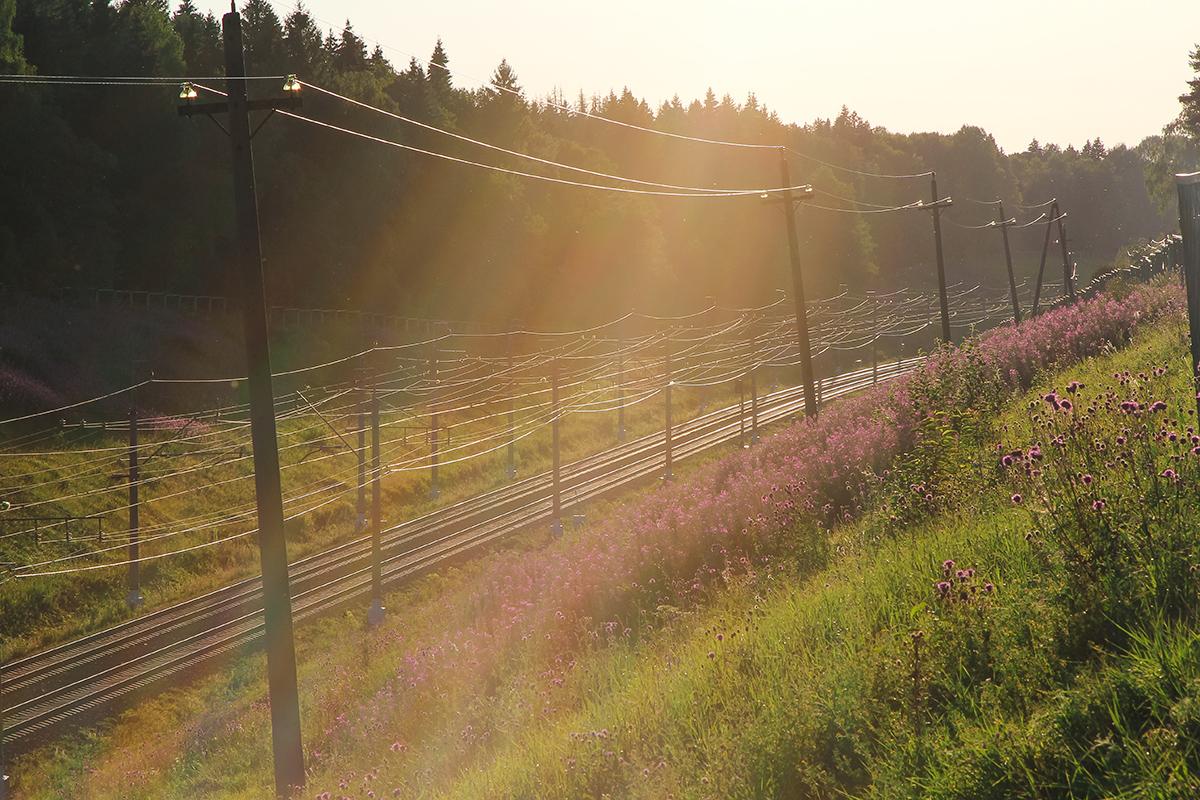 Вид на участок Фроловское - Покровка, перегона Клин - Подсолнечная